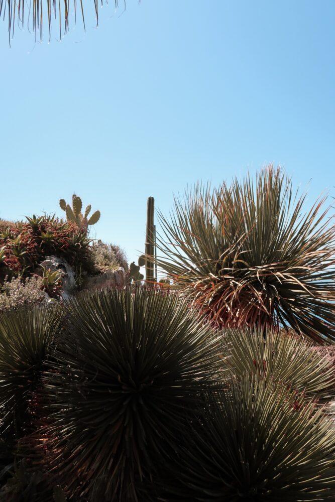cactus jardin botanique eze blog
